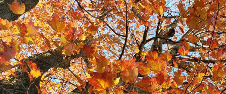 Bright Orange Leaves on Green